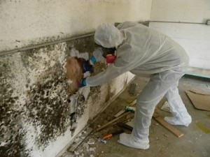 Mold-Removal-Remediation-Kahului-Maui-1_opt