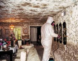 Removing Mold From Your Home Is Serious Business