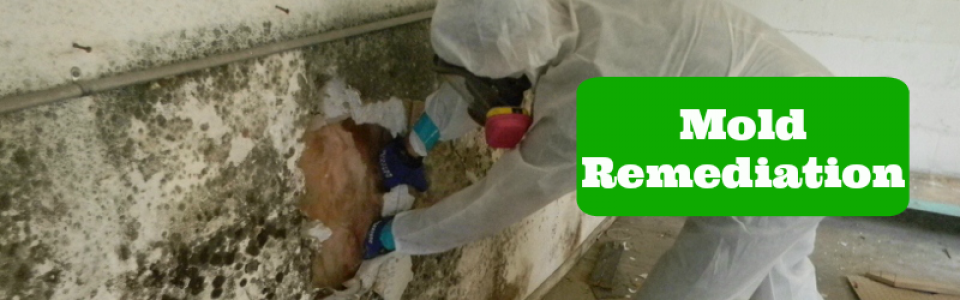 Mold-Removal-Remediation2