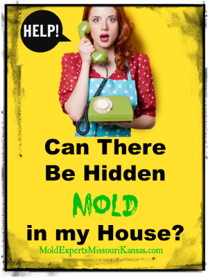 Can There Be Hidden Mold in my House PIN2