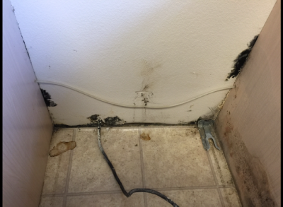 Can There Be Hidden Mold in my House?